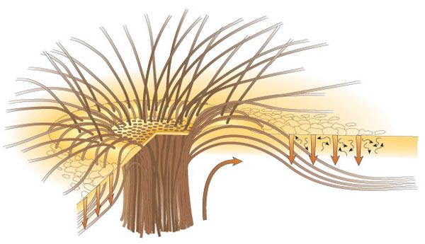 Ejemplo de flujos magéticos emergiendo de una mancha solar como la mostrada en la imagen de arriba. Fuente: http://www.me.rochester.edu/people/faculty/thomas_john/index.html